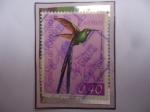 Stamps : America : Venezuela :  Colibrí Cola Larga (Agloioceus Kingi)