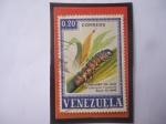 Stamps : America : Venezuela :  Cogollero del Maíz (Laphygma frugiperda)