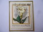 Stamps : America : Venezuela :  Symbolanthus vasculosus (Griseb)-Gilg . Flores de Venezuela.