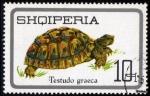 Stamps Albania -  Tortuga Graeca