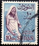 Stamps Africa - Sudan -  Recogida del algodon