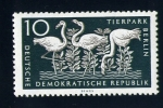 Stamps Germany -  flamencos