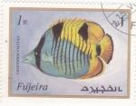 de Asia - Emiratos Árabes Unidos -  PEZ TROPICAL