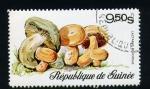 Stamps Africa - Guinea -  lactarius deliciosus