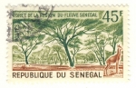 Stamps Africa - Senegal -  bosque de la region de Fleuve