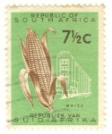 Stamps South Africa -  maiz