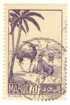 Stamps Africa - Morocco -  gacelas