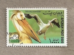 Stamps : Asia : Afghanistan :  Pelícano