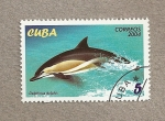 Stamps Cuba -  Delfín
