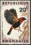 Sellos de Africa - Rwanda -  Aves de Rwanda. 'Eveque Rouge' .