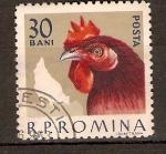 Sellos de Europa - Rumania -  GALLINA