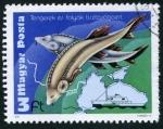 Sellos de Europa - Hungría -  Pesca