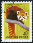 Sellos de Europa - Hungría -  Panda rojo