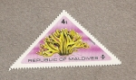 Stamps Maldives -  Stylotella