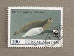 Stamps Asia - Turkmenistan -  Phoca cáspica