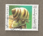 Stamps : Asia : Afghanistan :  Viviparus contectus