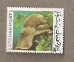 Stamps : Asia : Afghanistan :  Natica millepunctata