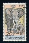 Sellos de Europa - Checoslovaquia -  elefante africano