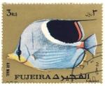 Sellos de Asia - Emiratos Árabes Unidos -  pez exotico