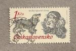 Stamps Czechoslovakia -  Perros de caza: Cocker spaniel