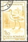 Stamps : Europe : Romania :  fauna, regurvirostra avosetta