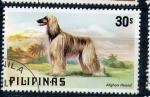 Stamps Asia - Philippines -  galgo afgano