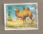 Stamps Mongolia -  Camello bactriano