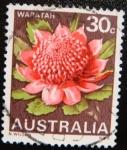 Sellos de Oceania - Australia -  Waratah
