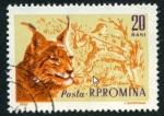 Sellos de Europa - Rumania -  Lince
