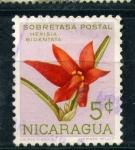 Stamps America - Nicaragua -  hexisia bidentata