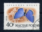Stamps of the world : Hungary :  lysandra hylas