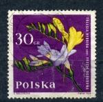 Sellos de Europa - Polonia -  freesia hybrida