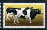 Sellos del Mundo : Europa : Polonia : vacas