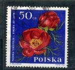 Sellos de Europa - Polonia -  paeonia tenuifolia