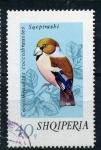 Stamps Europe - Albania -  Coccothraustes Coccothraustes