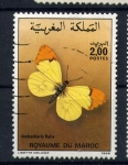 Sellos de Africa - Marruecos -  Anthocharis  belia
