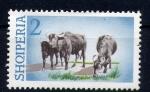 Stamps Europe - Albania -  Búfalos