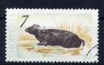 Stamps Albania -  Búfalo