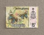 Stamps Asia - Malaysia -  Mariposas Precia orinthia