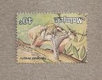 Stamps Asia - Malaysia -  Cynocephalus variegatus