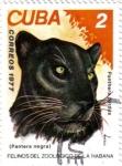 Stamps Cuba -  Felinos del zoo de la Habana.Pantera