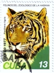 Sellos de America - Cuba -  Felinos del zoo de la Habana.Tigre