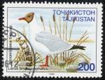Stamps Asia - Tajikistan -  Fauna
