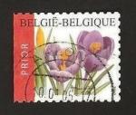 Sellos de Europa - Bélgica -  flora, crocus vernus