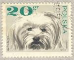 Sellos de Europa - Polonia -  perro Maltes