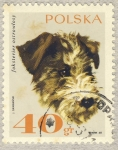Stamps Europe - Poland -  perro Fox Terrier