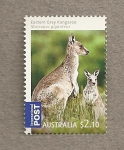 Stamps Australia -  Marsupiales