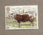 Stamps United Kingdom -  Razas de vacuno