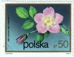 Stamps Poland -  Flores.