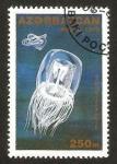 Stamps Asia - Azerbaijan -  medusas, polyorchis karafutoensis